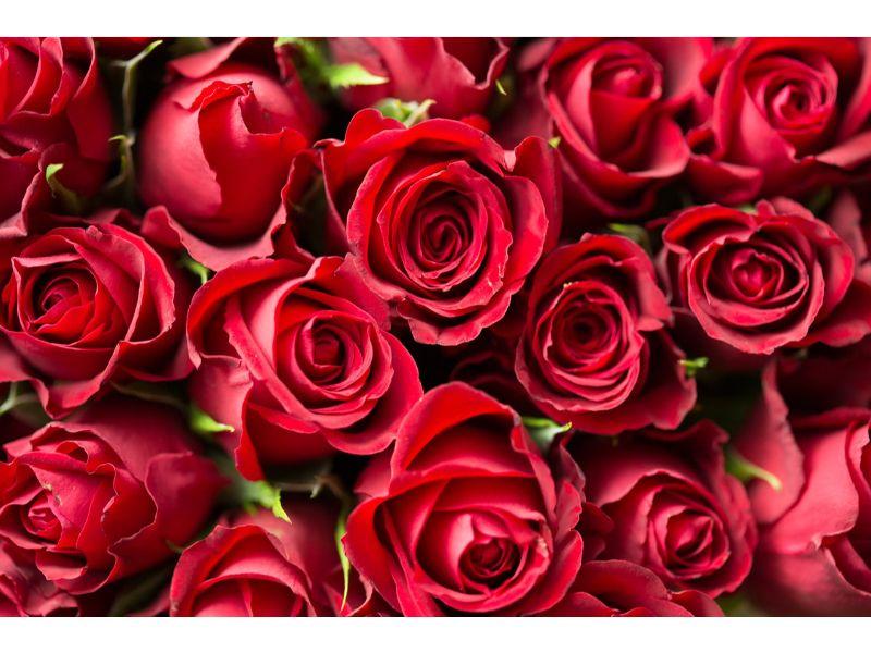 バラの束の写真