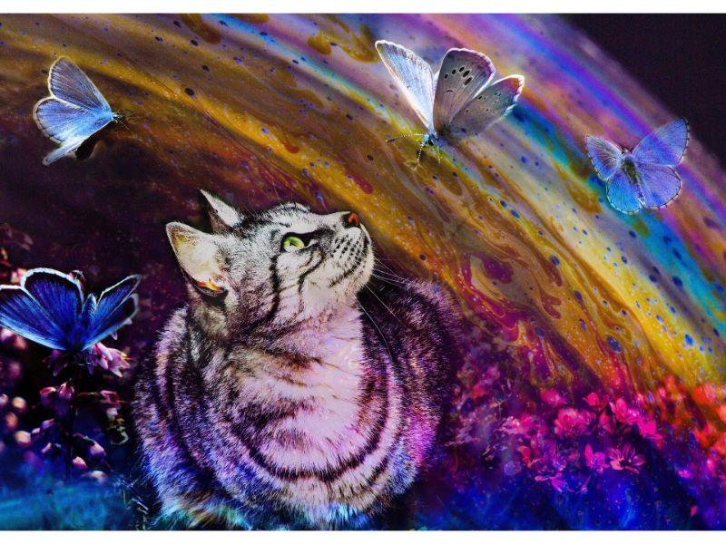 猫が虹を見上げる絵