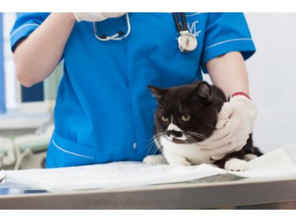 診察を受ける猫の写真