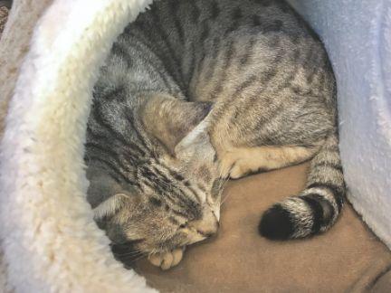 毛布にくるまって丸くなって寝ている猫の写真