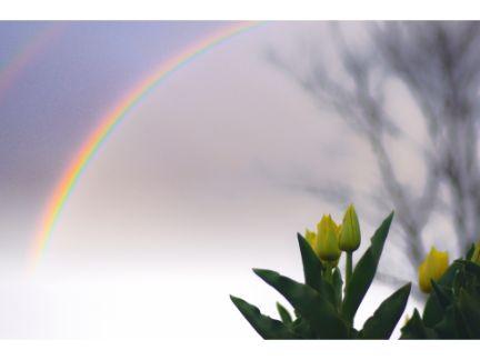 虹とチューリップの写真