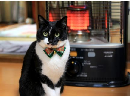 ストーブの前で暖まる猫の写真