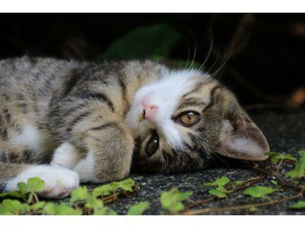 寝ながらこっちを見る猫の写真