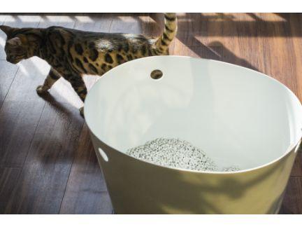 猫トイレの横を素通りする猫の写真