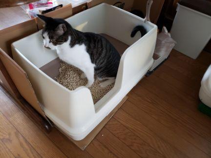 猫トイレで用を足す猫の写真