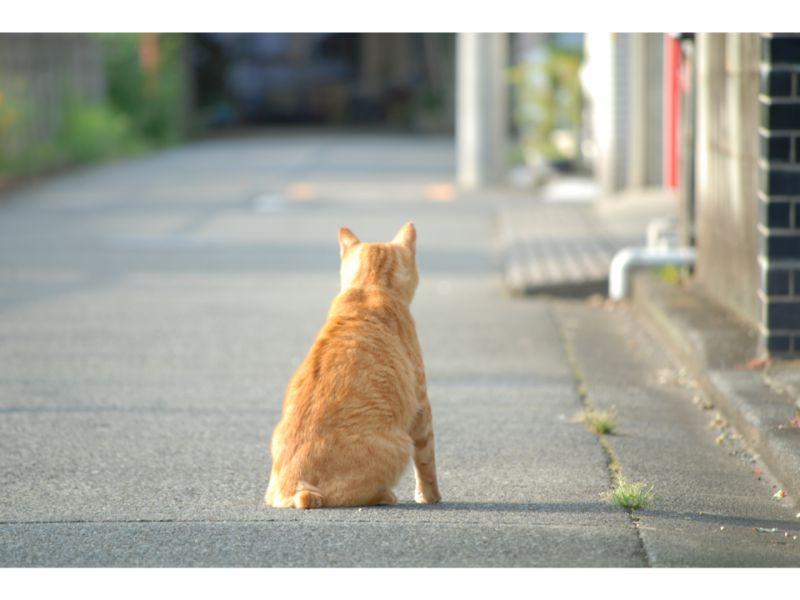 哀愁漂う猫の後ろ姿の写真