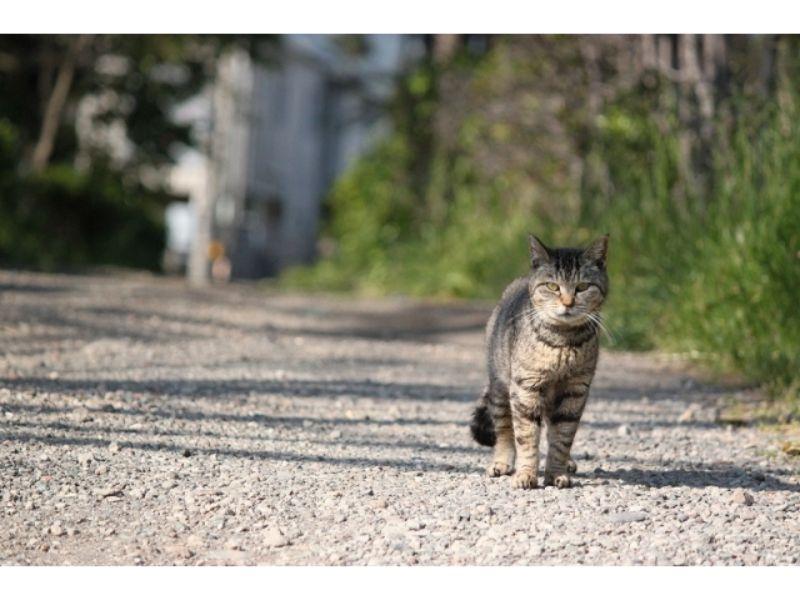こちらを見る野良猫の写真