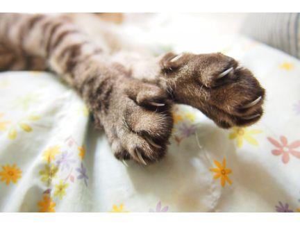 猫の手から爪が出ている写真