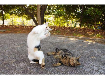 猫がファイティングポーズを取っている写真