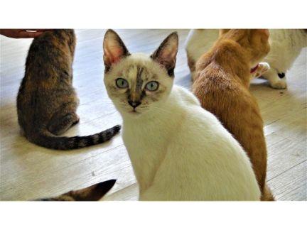 猫カフェの猫達の写真
