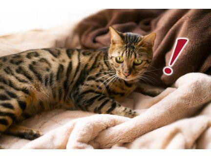 猫が何かを警戒している写真
