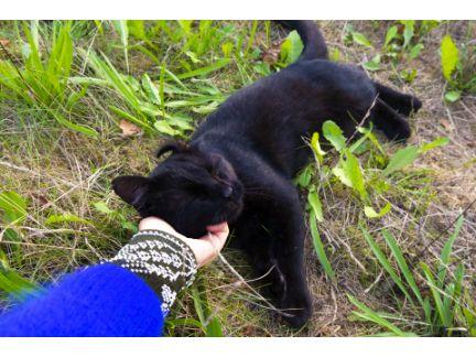 甘える黒猫の写真