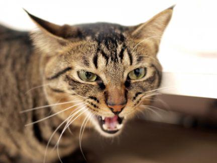 猫が威嚇している写真