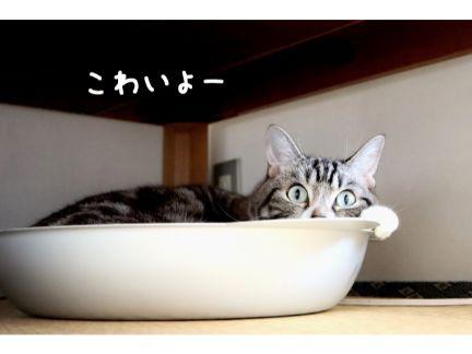 猫鍋に入って警戒している猫の写真