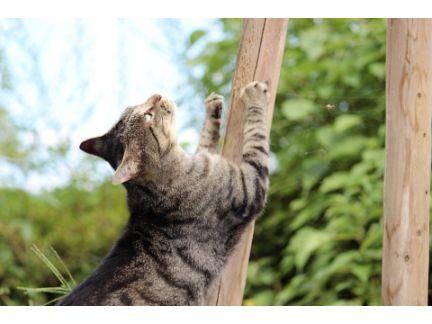 猫が木で爪とぎしている写真