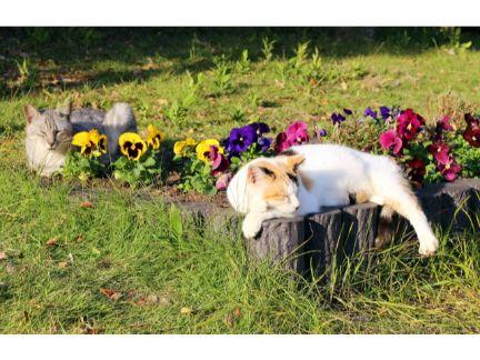 花壇の上で寝る野良猫の写真