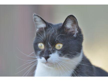 驚いた様子の野良猫の写真