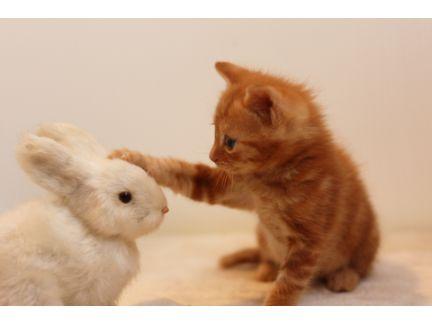 猫がうさぎのぬいぐるみの頭に手を置いている写真