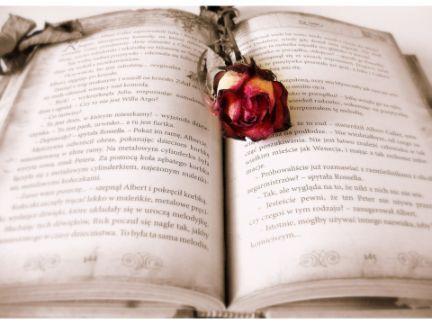 小説の上にバラが置いてある写真