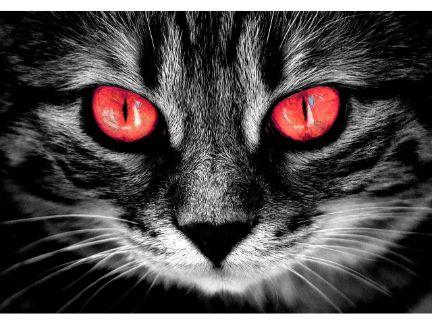 猫の目が赤く光っている写真