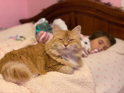 子供に添い寝する猫の写真
