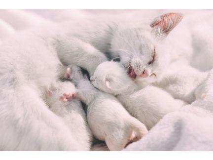 仔猫を毛繕いする母猫の写真