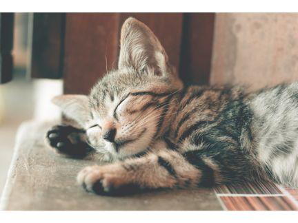 眠る仔猫の写真