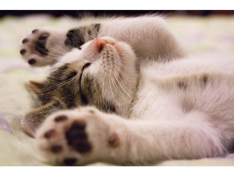 猫が仰向けで寝ている写真
