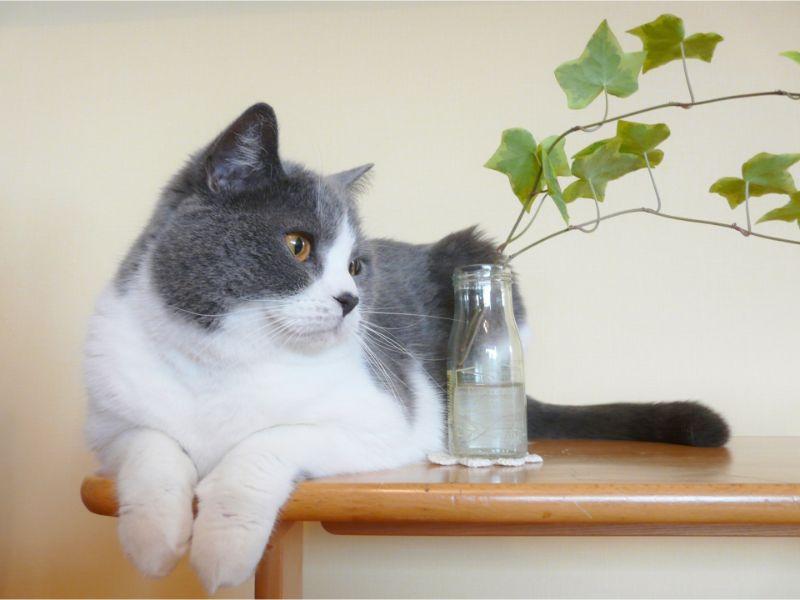 机の上に座って遠くを見る猫の写真