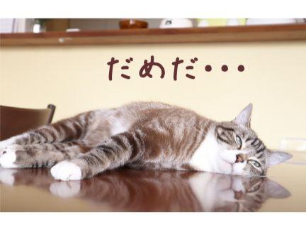 猫がぐったりして寝ている写真