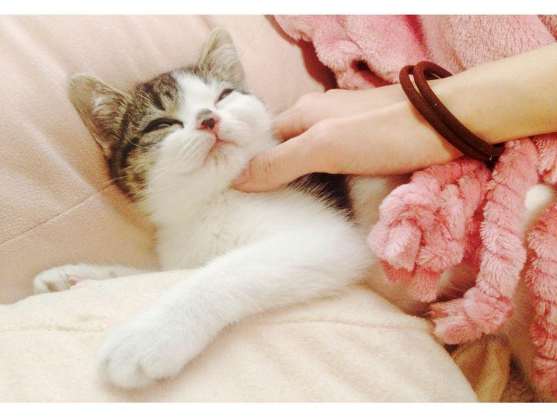 寝ている猫を撫でる写真