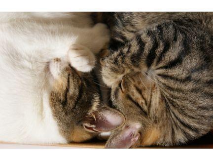 2匹の猫が寝ている写真
