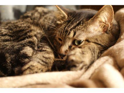 寝ている猫の写真