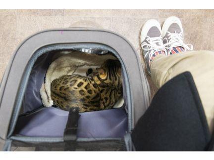 待合室で怯えて待つ猫の写真