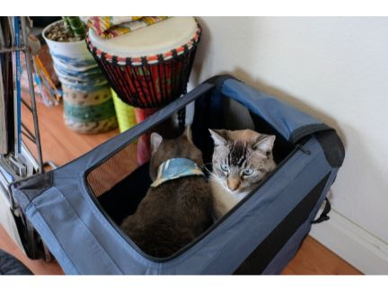キャリーケースに入る2匹の猫